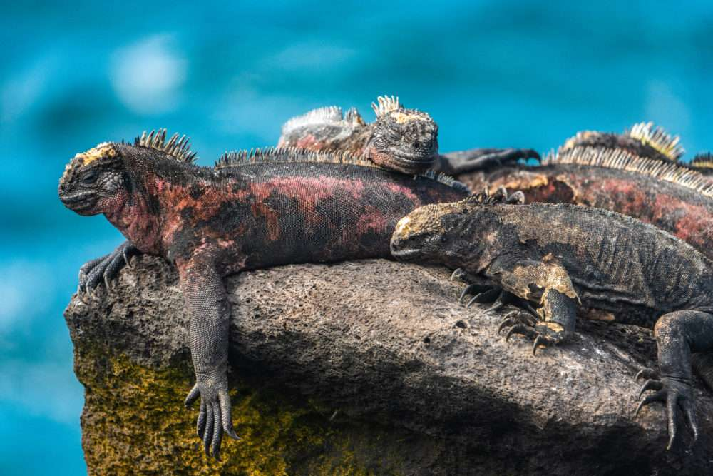 On Assignment: The Galapagos Archipelago